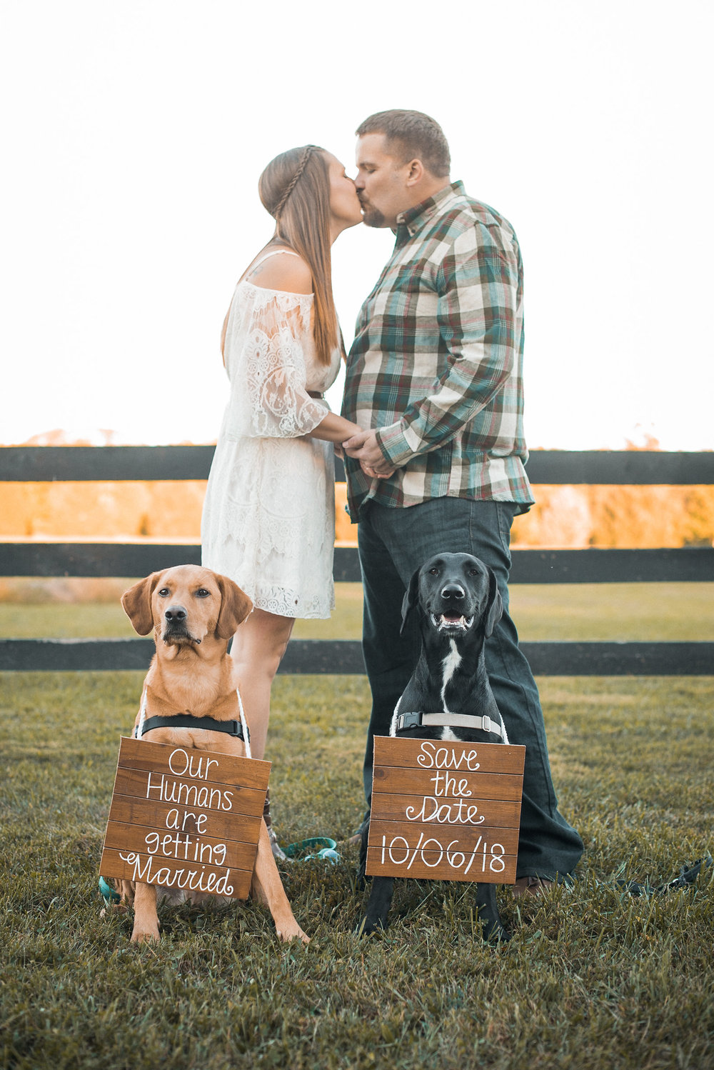 Dogs with wedding signs