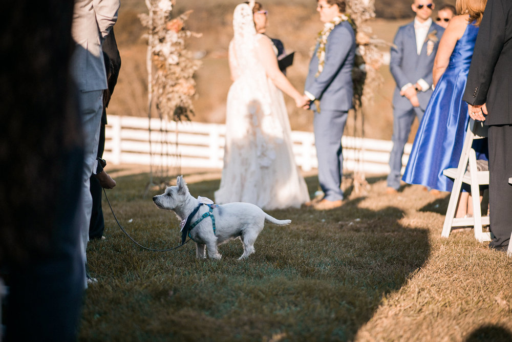 Dog at wedding ceremony