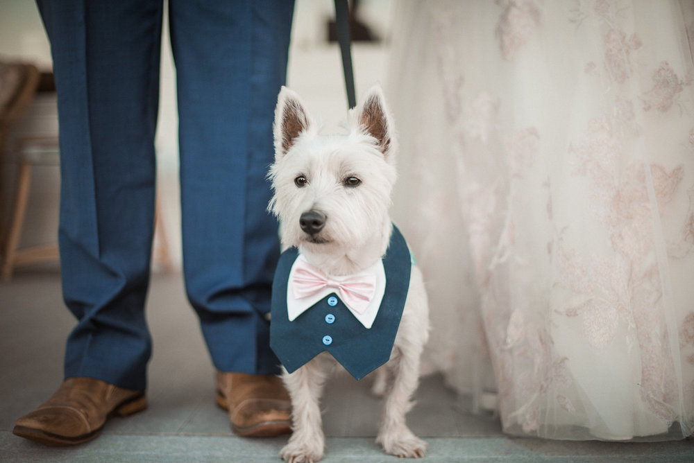 Dog standing between bride and groom