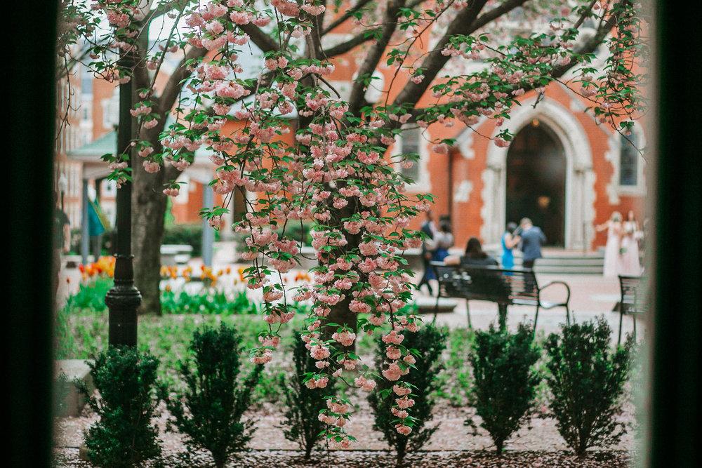 Flowering tree outside church