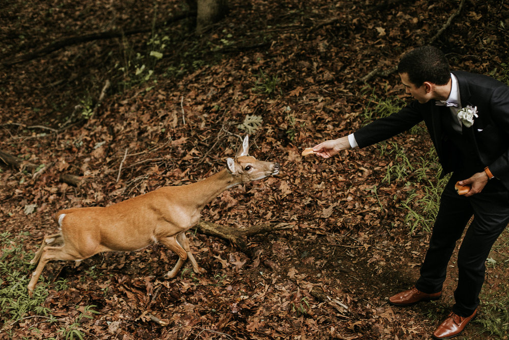 Groom feeding deer
