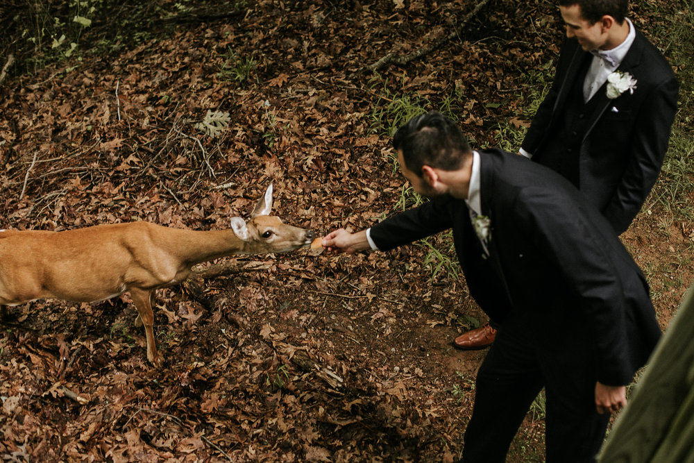 Groomsmen feeding deer