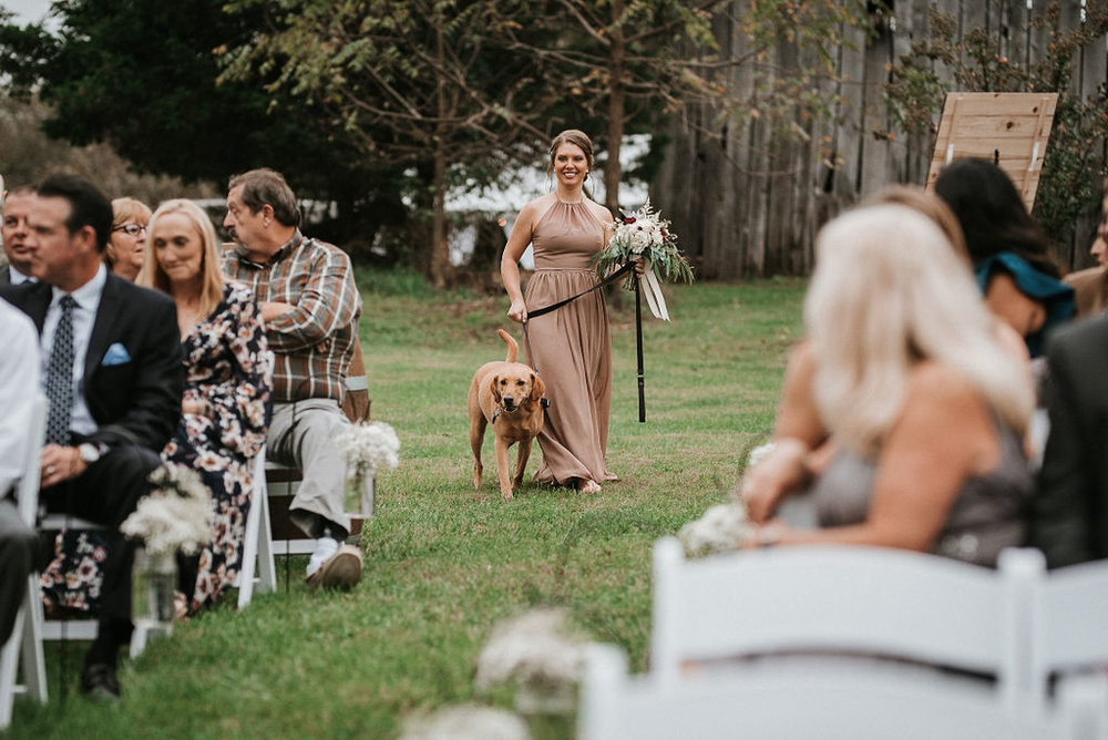Bridesmaid and dog walking up the aisle at 48 Fields Farm