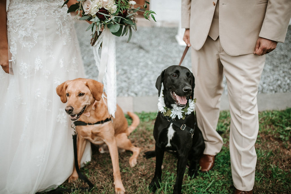 Bride and Groom's dogs posing at 48 Fields Farm