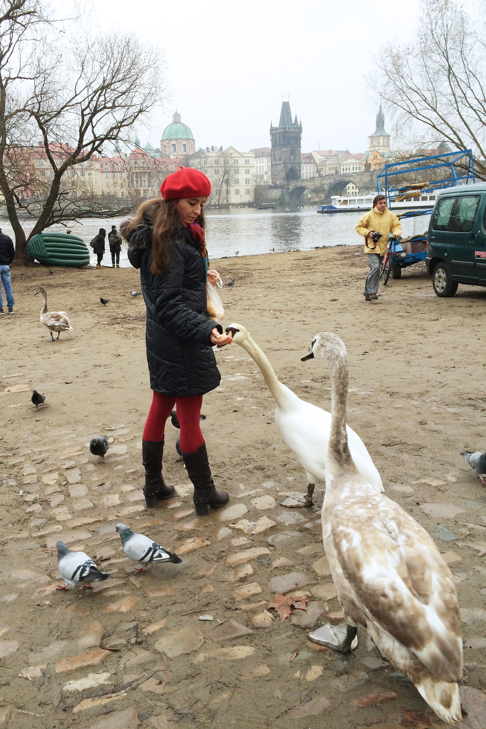 We stopped by the river to watch these swans — they just wandered up to people with no fear.