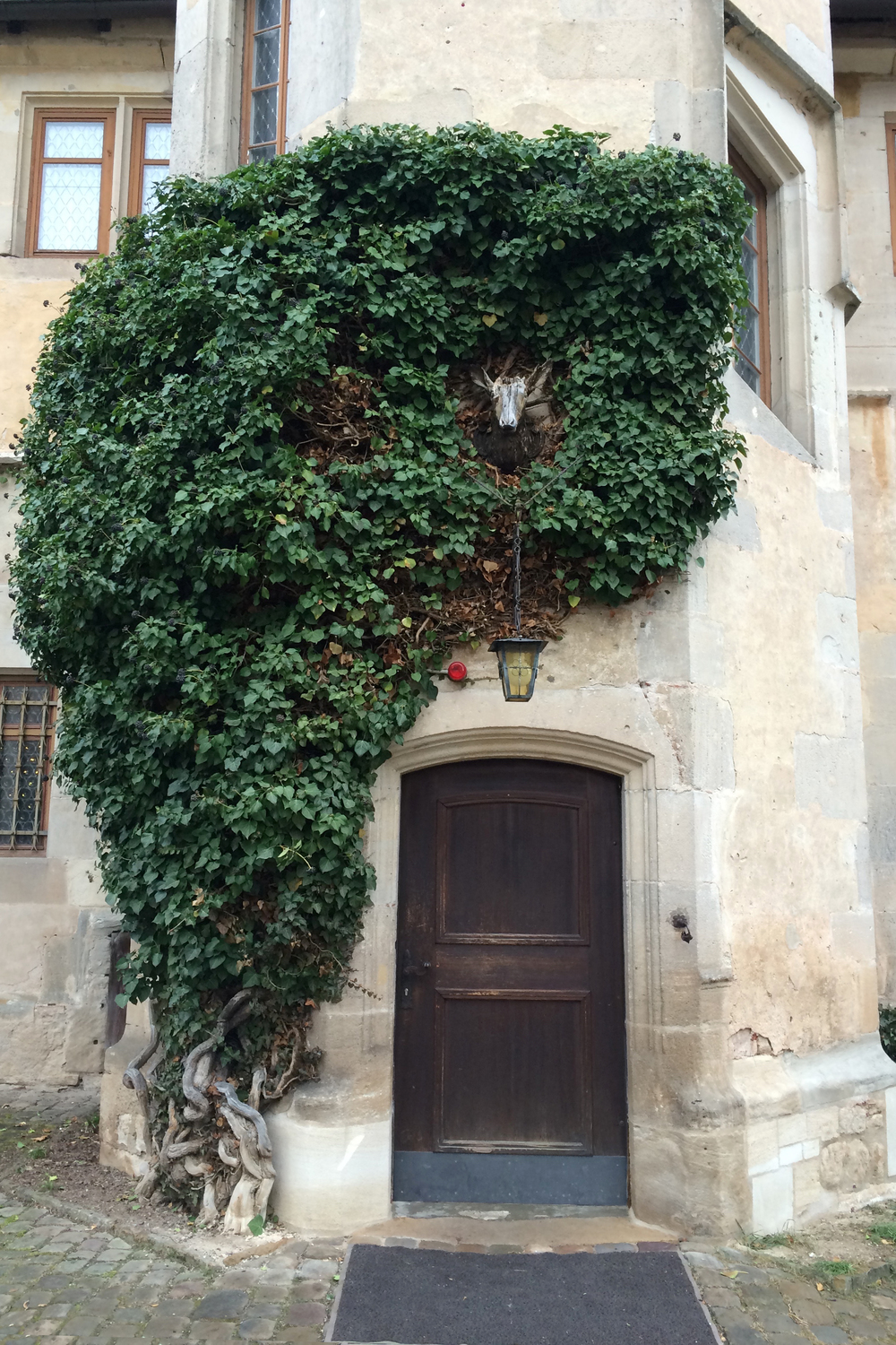I liked these cool old vines that wrapped around some of the walls, doorways, and arches.