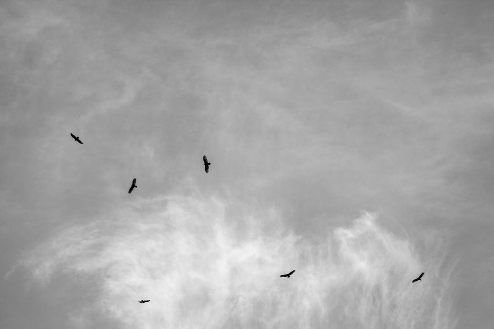 Rosebrock-BIRDS-2995-9.jpg