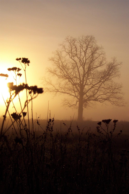 Stark Sunrise