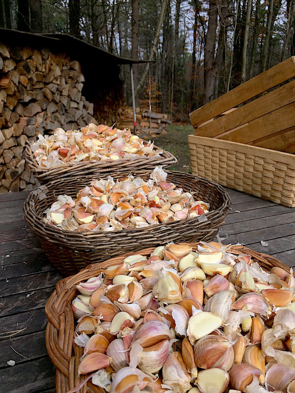 Three large baskets of individual cloves ready for planting
