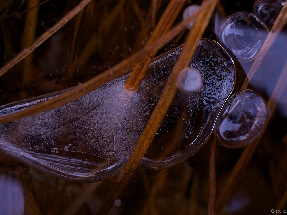 Horizontal bubbles are pierced by blades of grass growing up from the bed of the river. The small bright circle is not a reflection, but another air bubble a couple of inches  above  the large one.