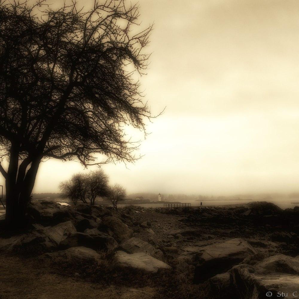 seacoast_fog_P1110154.jpg