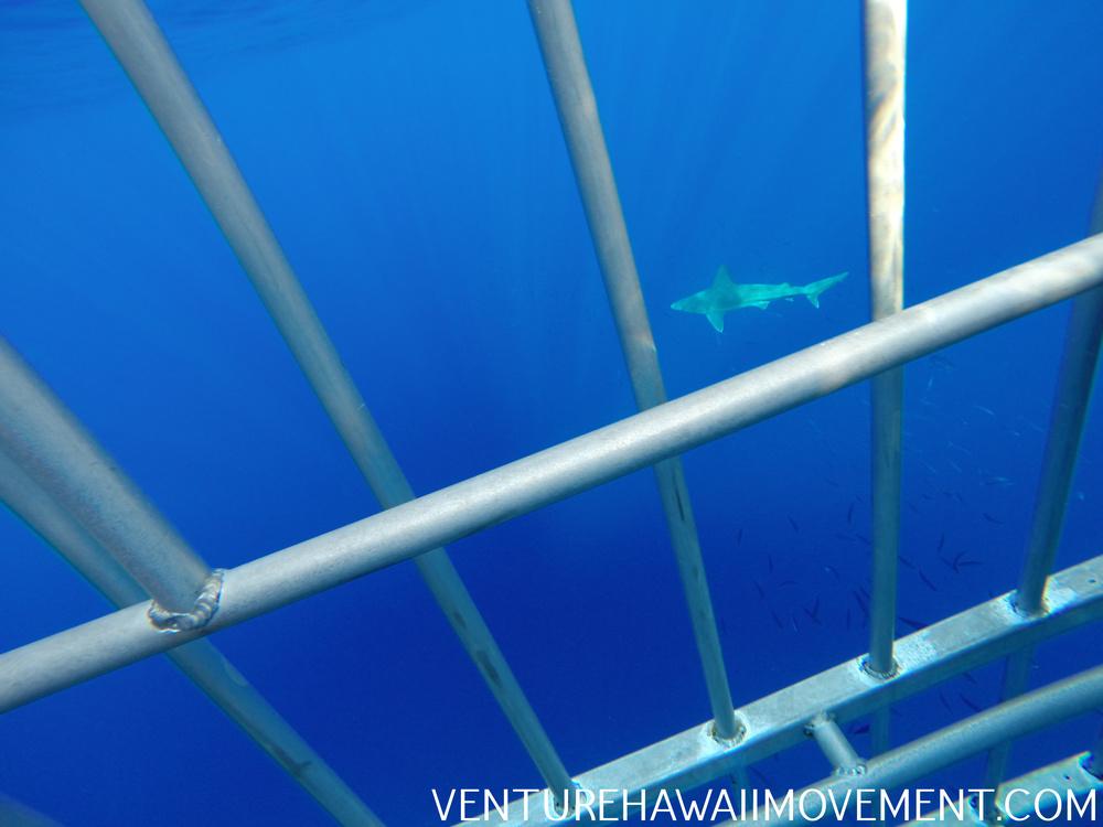 Shark Cage Tours Florida