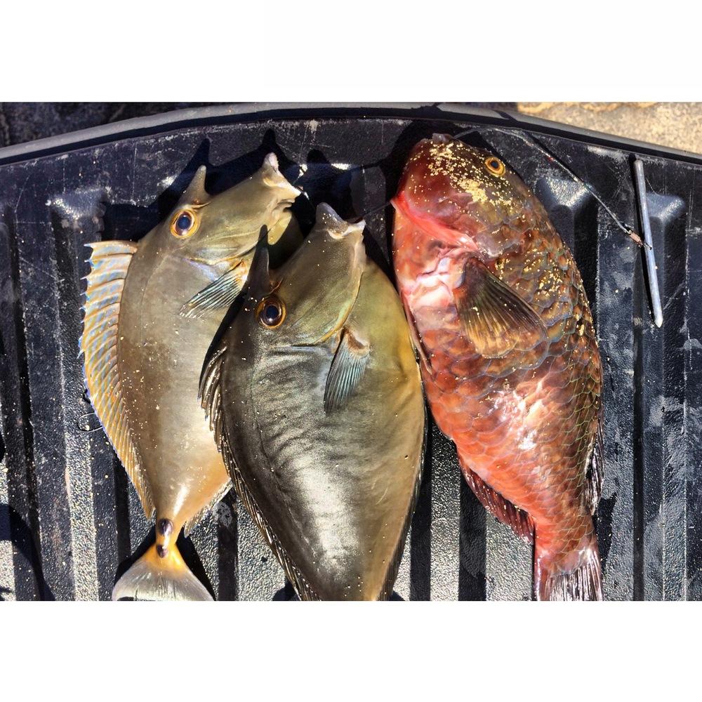 @jimmy_vhdt quick solo dive sesh catch
