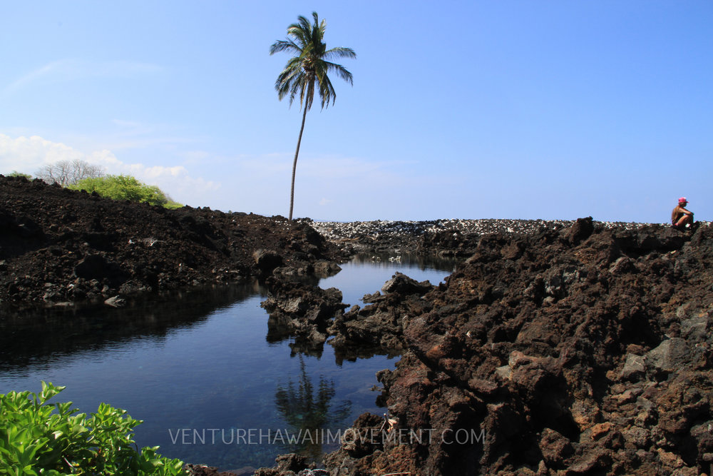 Lone Palm Pond - We've heard some rumors of the name of this place not too sure how accurate it is but we decided to keep this location under wraps to preserve this pristine tide pool. For now it will be called the Lone Palm Pond.