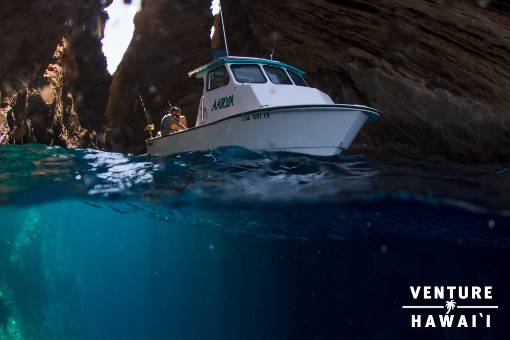 Team Venture Hawai'i  - Dive trip that gave us memories of a lifetime!