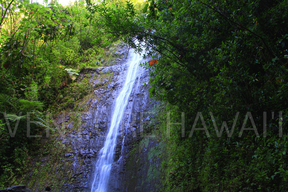 Manoa Falls  - With all the rain hitting our Hawaiian Islands from Hurrican Iselle, we decided to check out a waterfall when the weather cleared. Originally we planned to check our 2 out of 7 waterfalls located in the Manoa Valley but  it didn't go according to plan.
