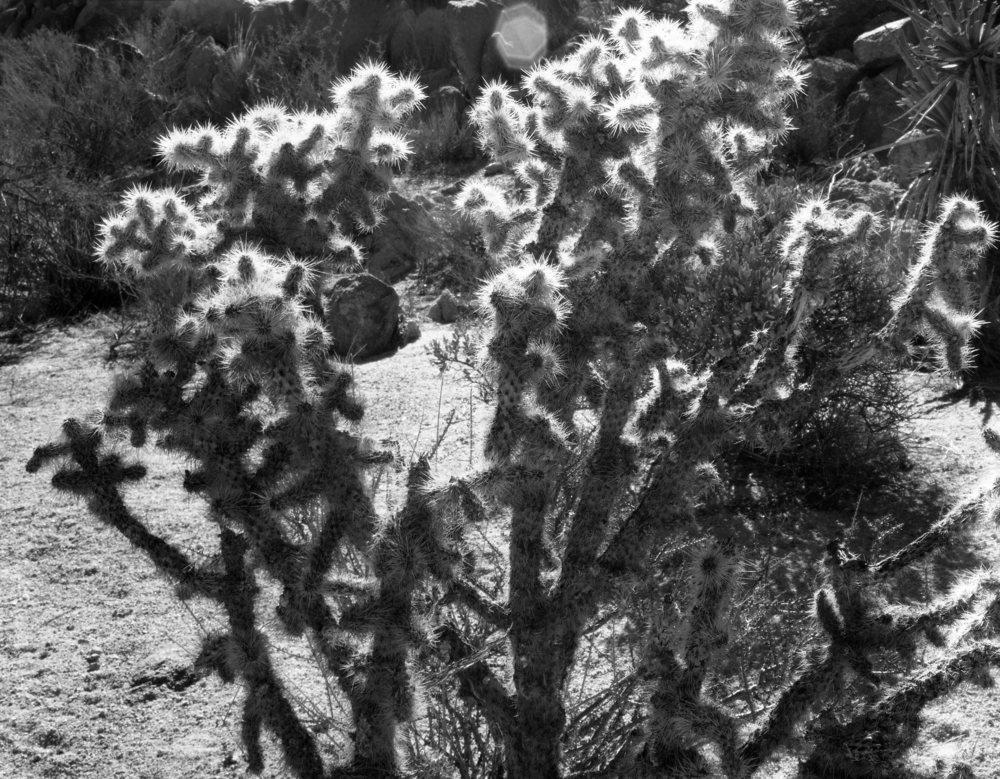 Joshue Tree024.jpg