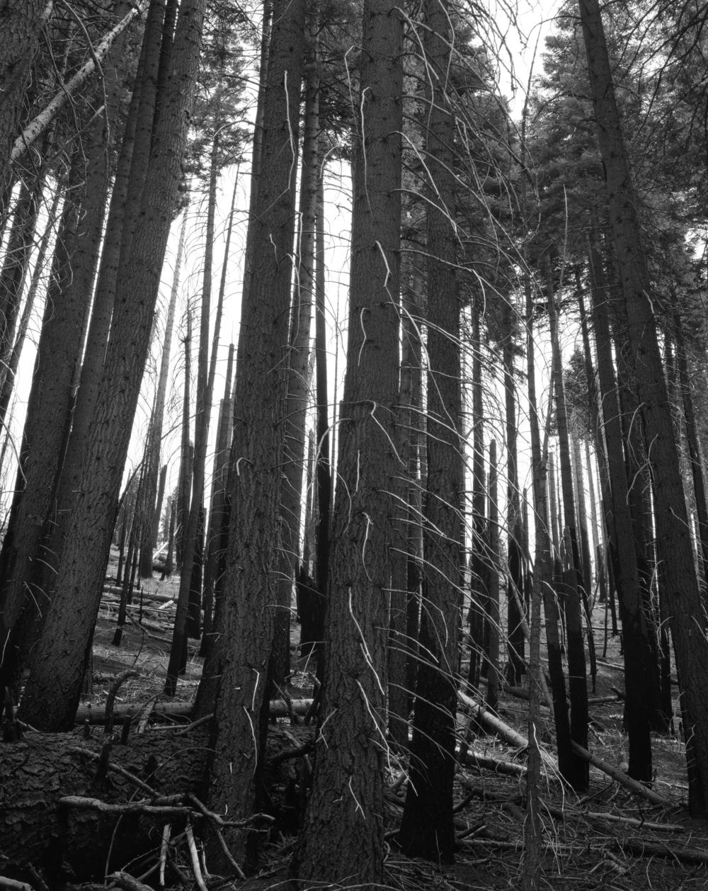 Yosemite039.jpg