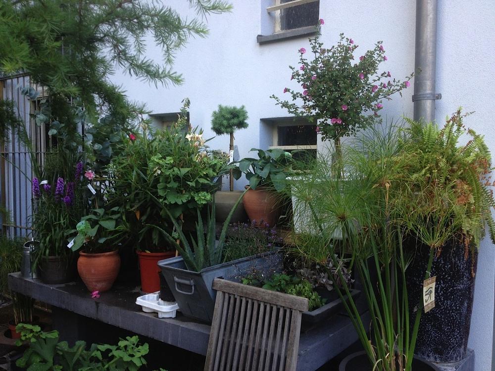 Hinterhof_Mitte.jpg