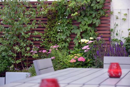 Kletterpflanzen auf Dachterrasse Berlin