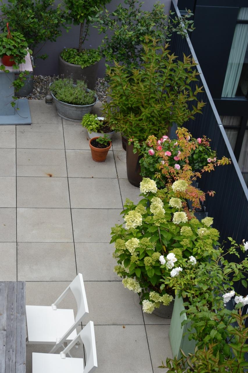 Bepflanzung Dachterrasse Berlin, Begruenung Dachgarten, Pflanzgefaesse auf Dachterrasse, Betonfliesen Dachgarten