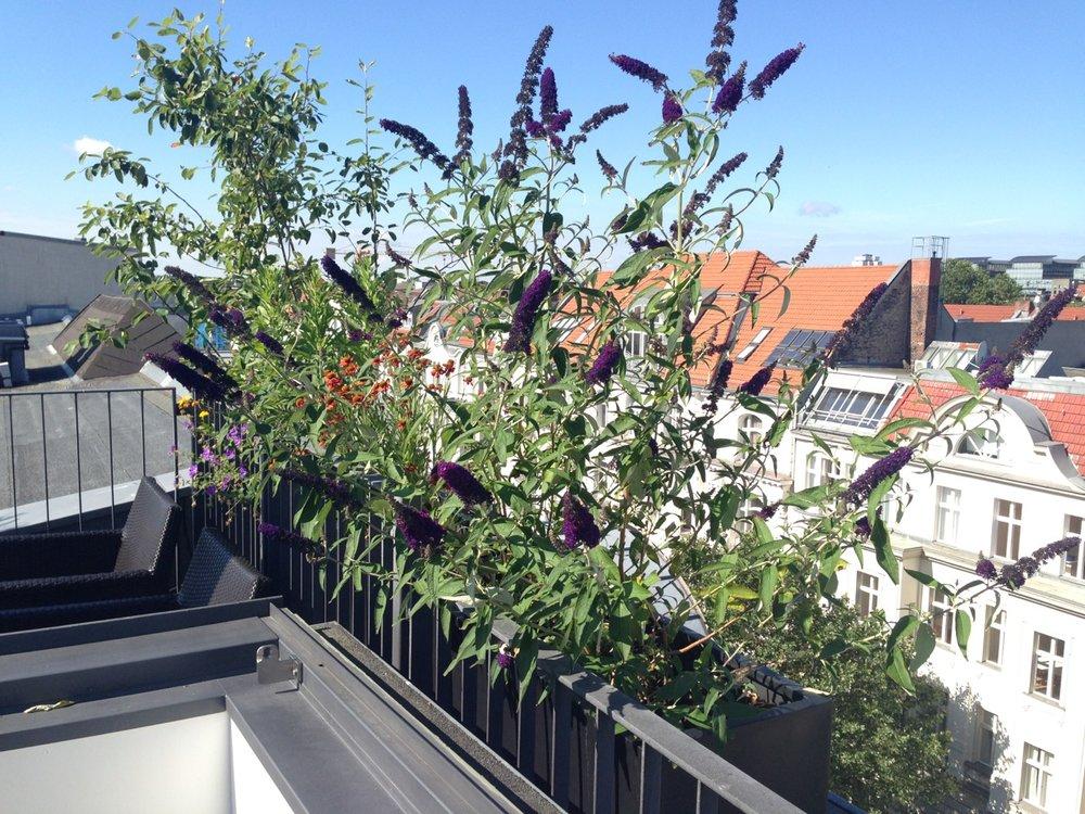 Begrünung Dachterrasse Berlin