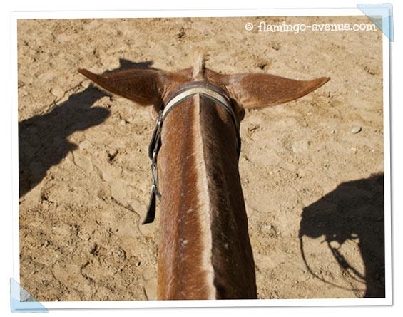 Muli Buttercup