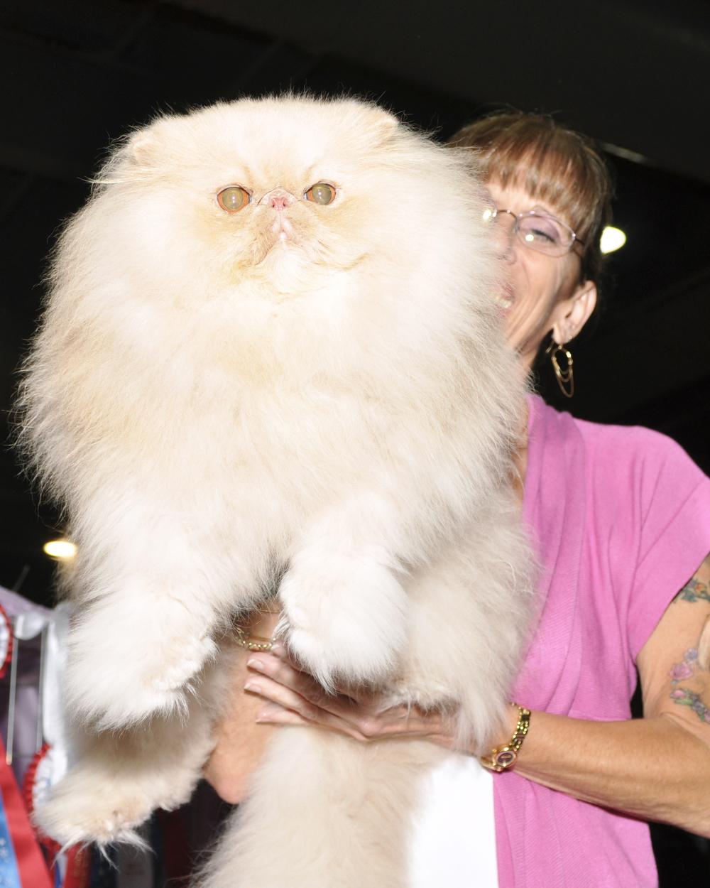 cat21.jpg