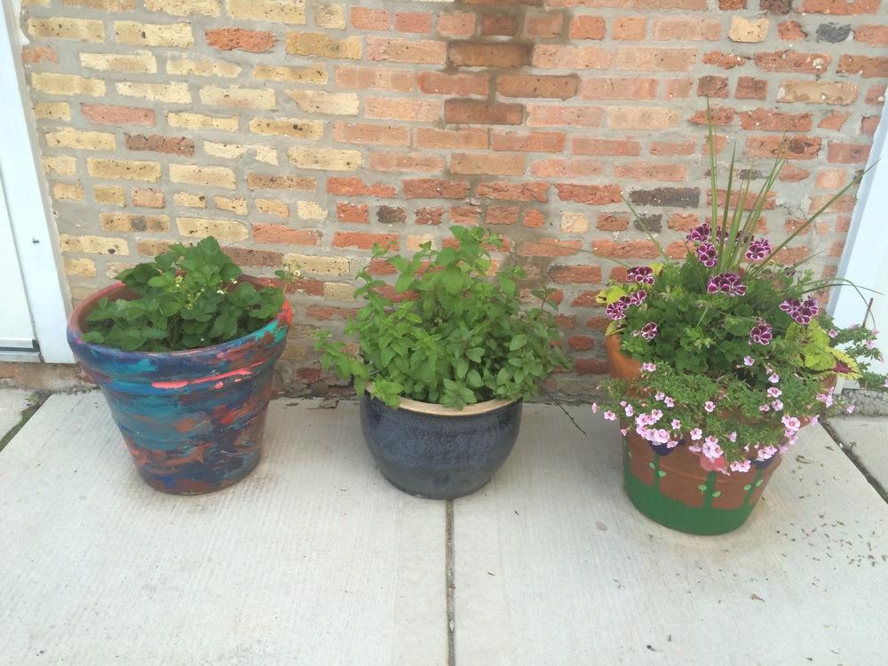 Student Learning Garden