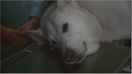 white-dog.jpg