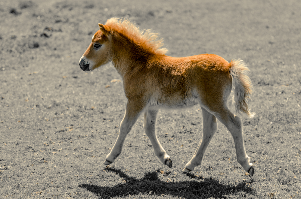 Pony tale?