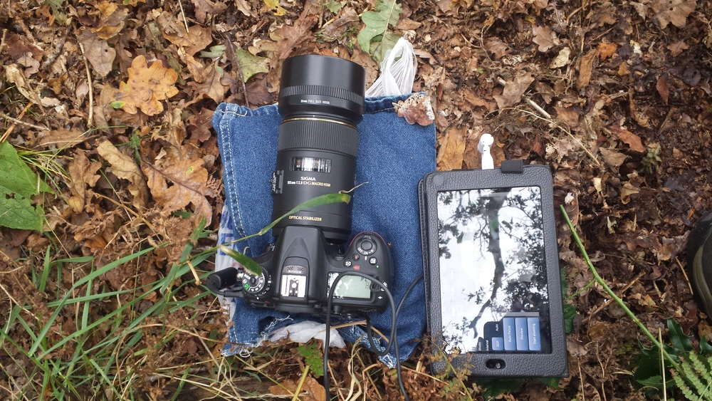 The easiest way to photograph fungi on the ground