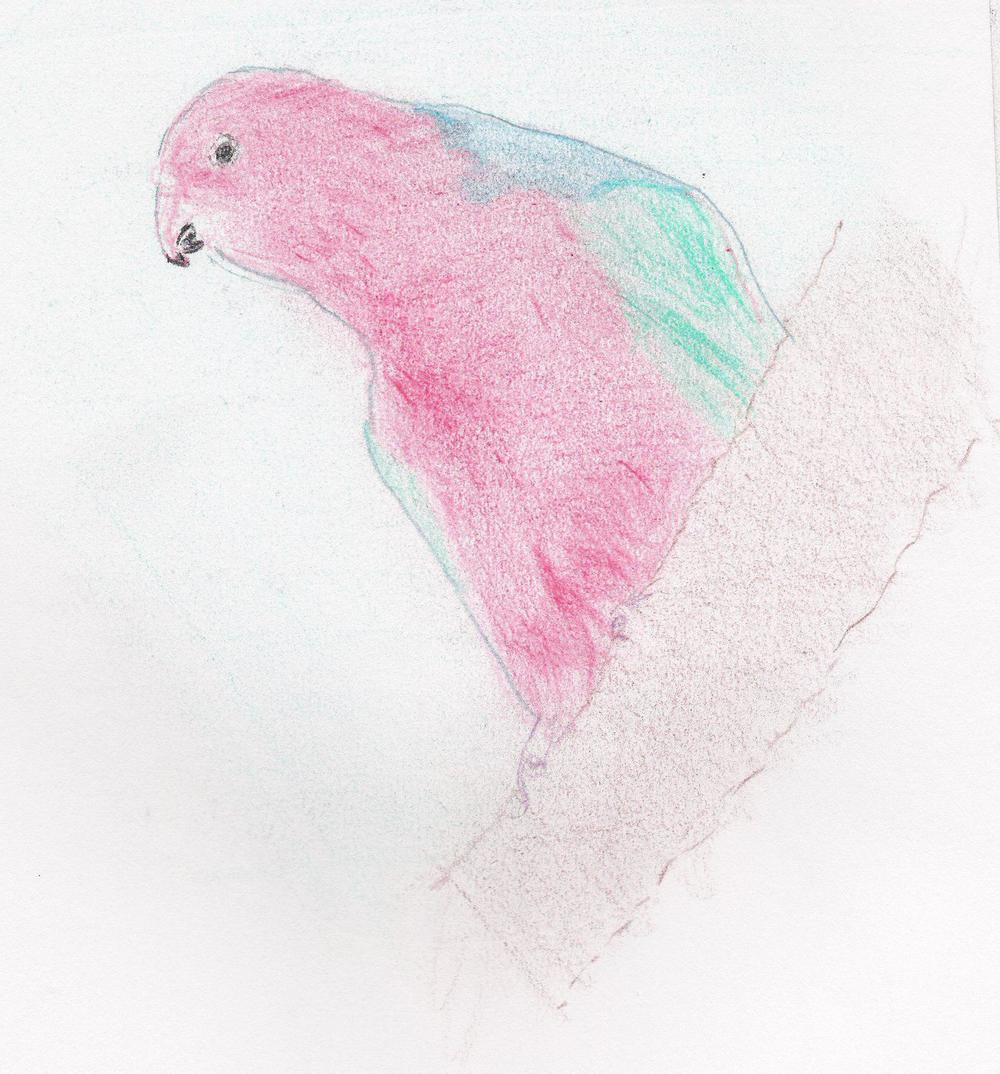 Animal 1 bird.jpg