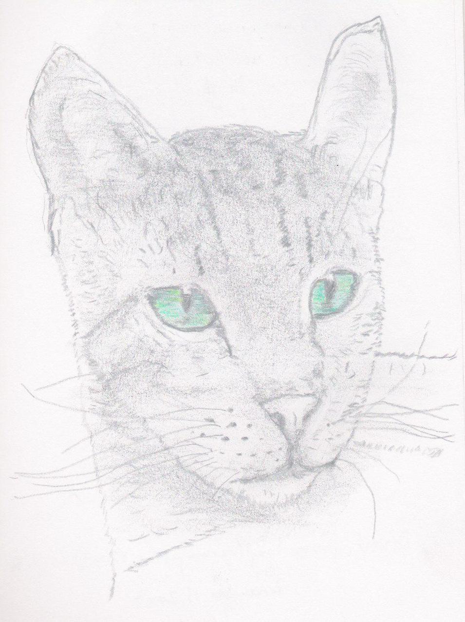 Animal 3 cat.jpg