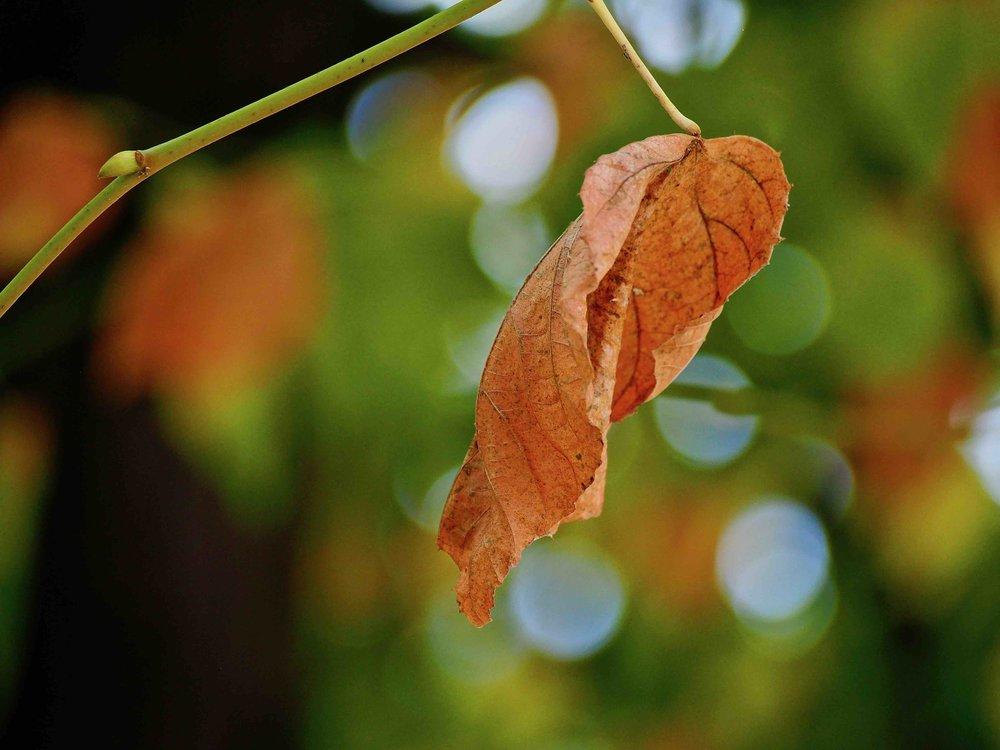 leaf 5.jpg