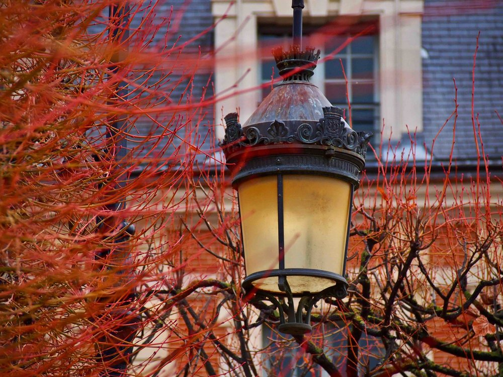 lamp and branches.jpg