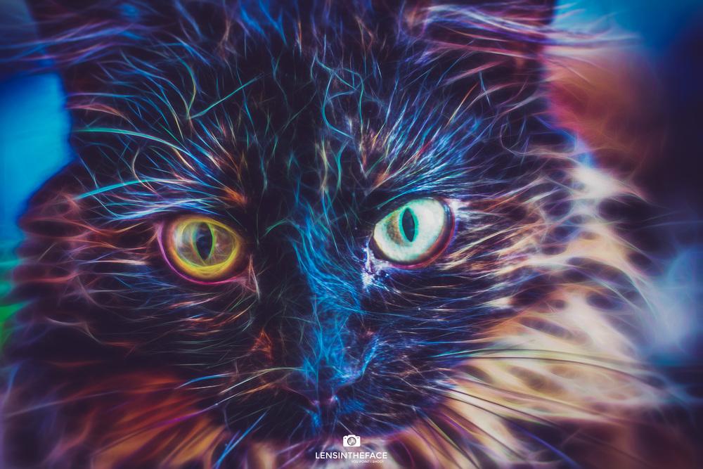 Electro Kitty...