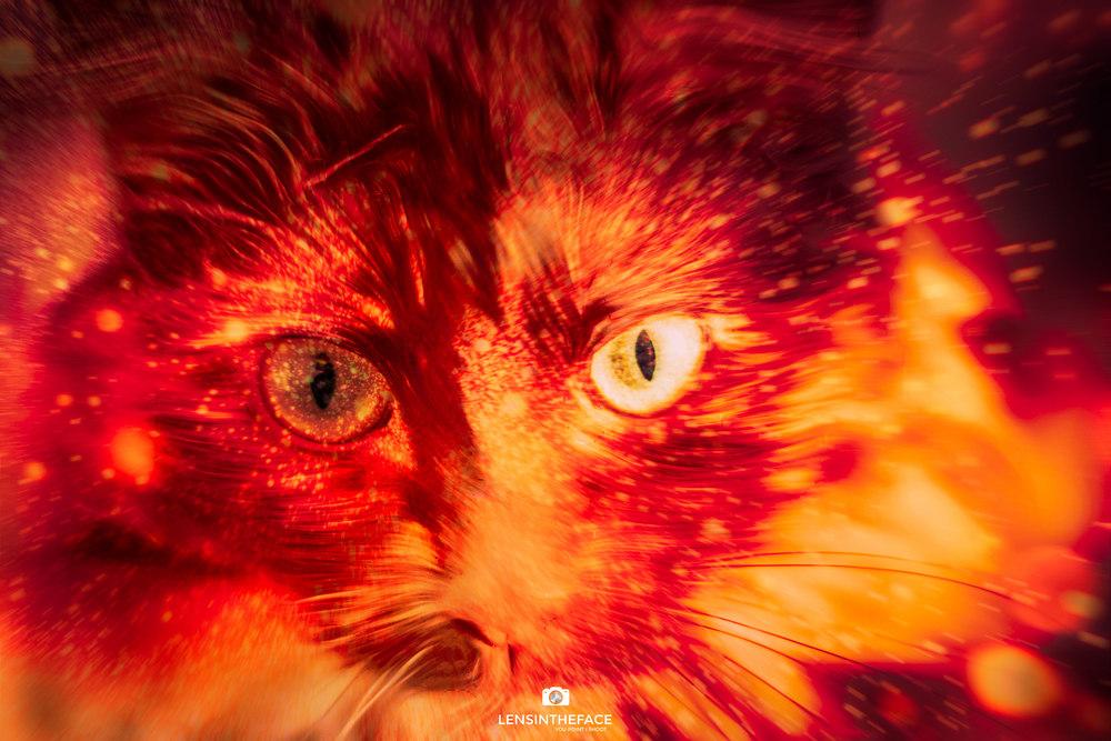 Sauron Kitty!
