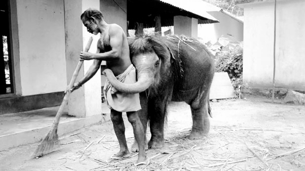 ELEPHANTS + HUMANS : HOMELESSNESS + ALCOHOLISM Join Street Psychiatrist Sushrut Jadhav,Senior Lecturer in Cross-cultural Psychiatry, University College, London and Dr Maan Barua Technological Natures, School of Geography and the Environment from the University of Oxford for a discussion on homelessness and alcoholism, two devastating conditions experienced by both species. A unique insight into their combined work on elephants, ethological and ethnographic methods to pave new ways for ecologizing politicsof landscape and human-animal relations. The big tree 17:00 - 18:30