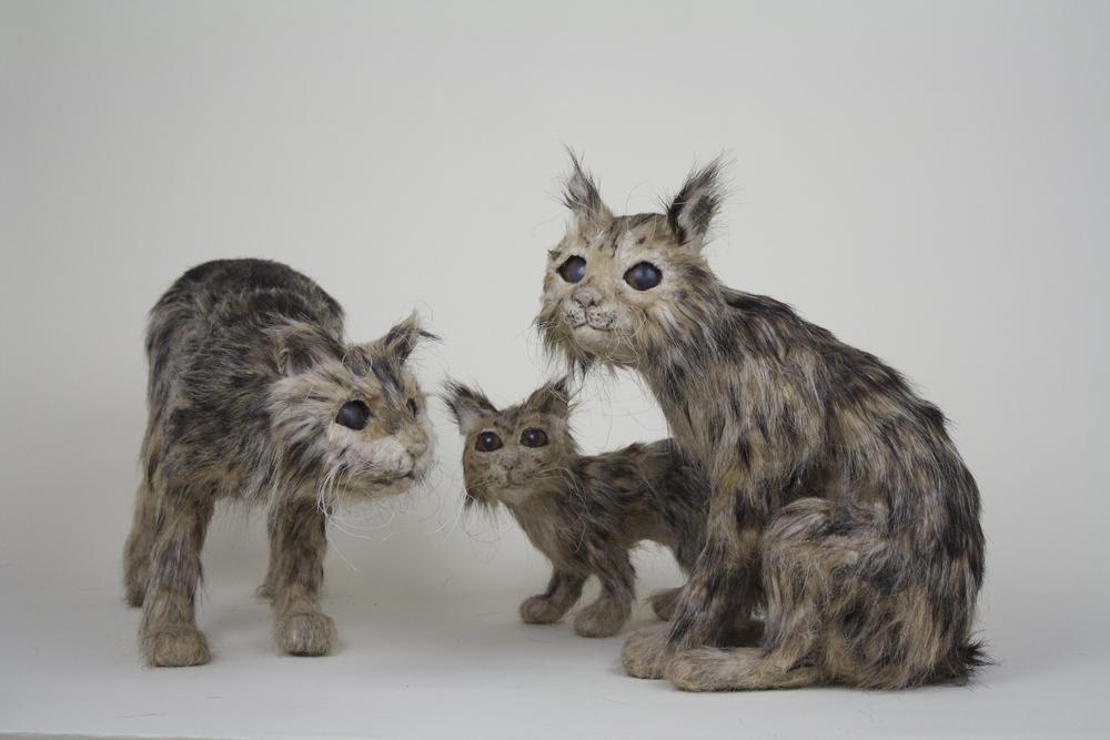 California Cave Bobcats