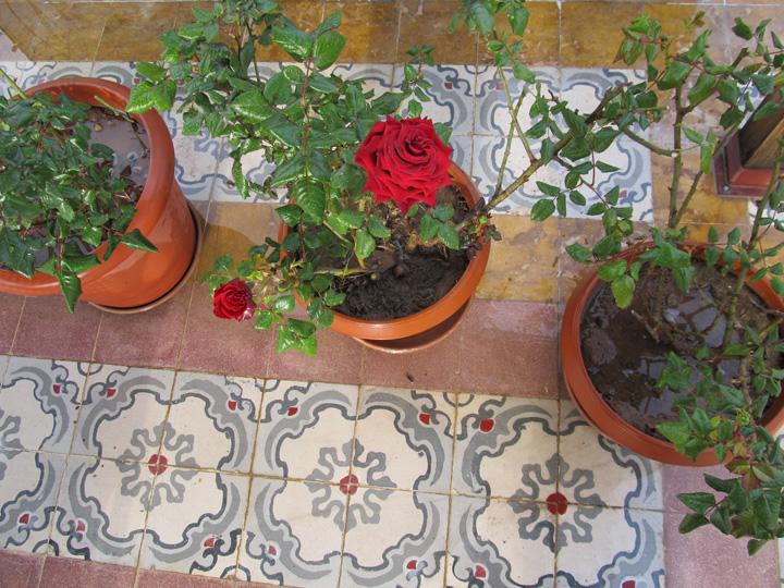 damascus renaissance 2011 damascus 282.jpg