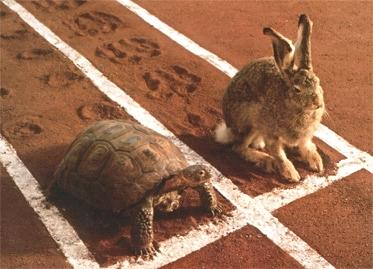 hare_turtle.jpg