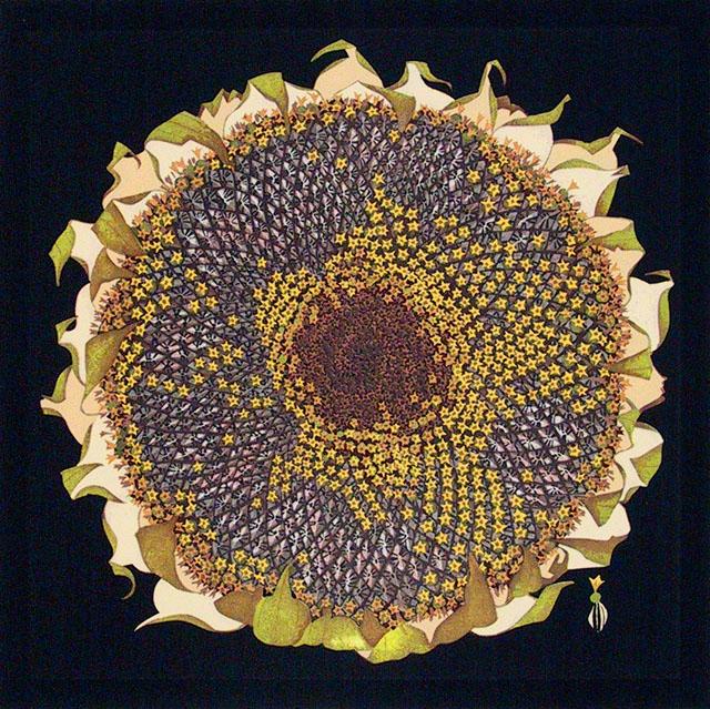 Seed Sunflower