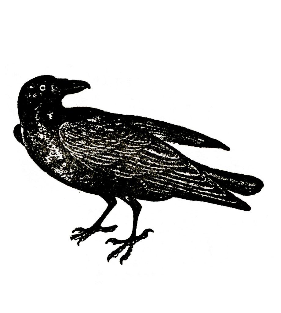 raven =1024.jpg