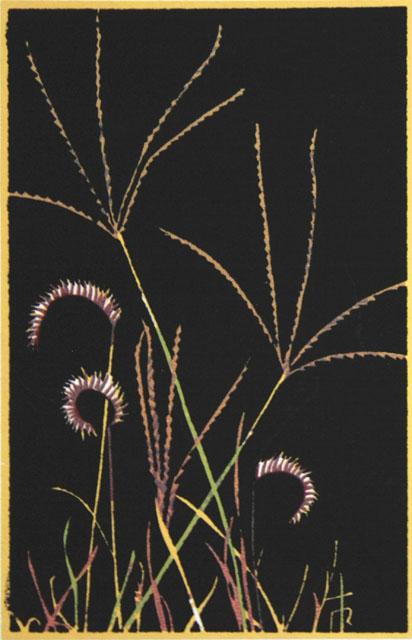 S05_Grass.jpg