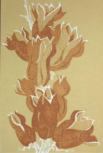 S11_Yucca.jpg