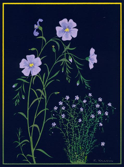 S13_Blue Flax.jpg
