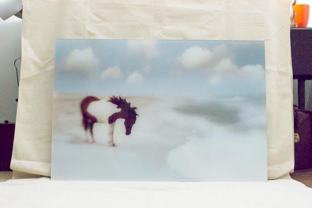 janlakey_assateaque_wild-horses-8.jpg