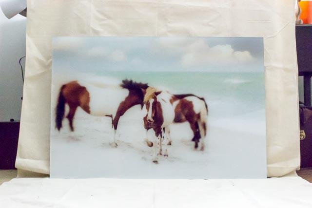 janlakey_assateaque_wild-horses-9.jpg
