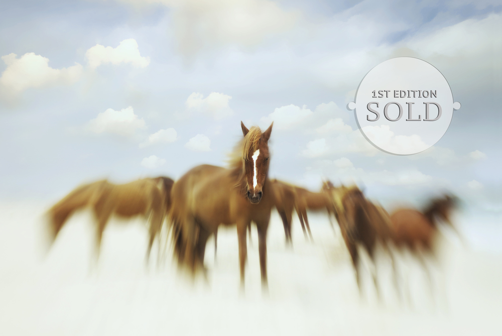 AssateaqueDream2_SOLD.jpg